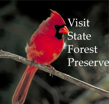 "Example of a text image with a cardinal perched on a branch and the words ""Visit State Forest Preserve"""